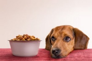 Dog Training With Food, Yes or No?