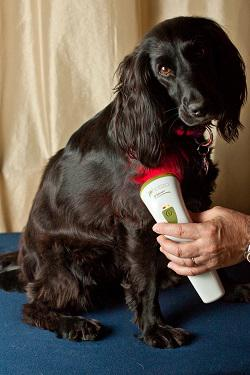 Beakthrough Red Light Therapy Device For Animals Up To