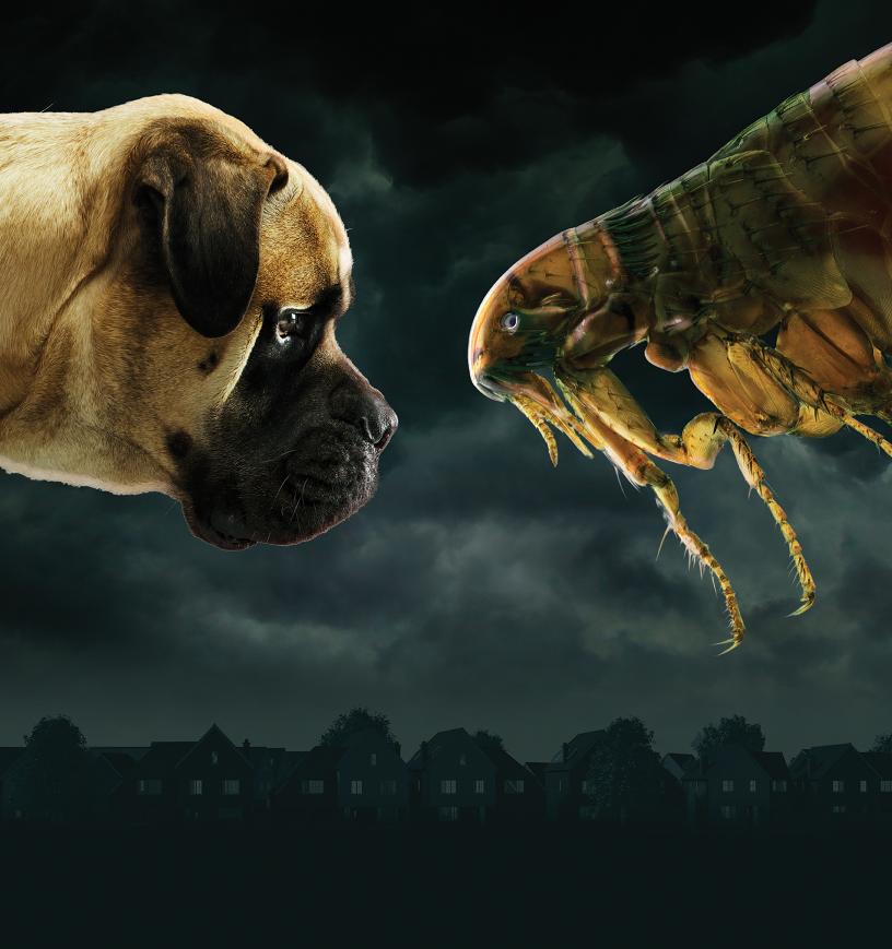 Flea-Campaign-Image