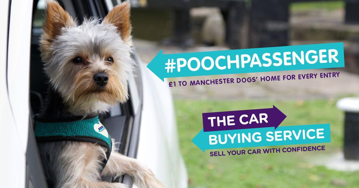 Pooch passenger