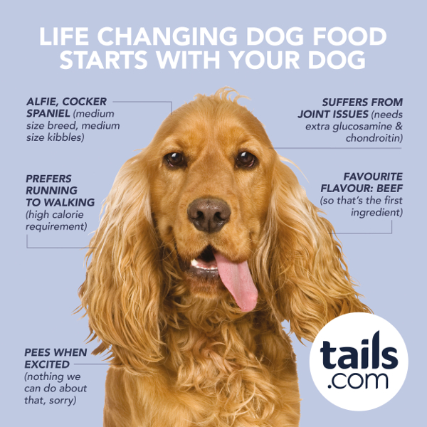 HOW TAILOR-MADE FOOD WILL CHANGE YOUR DOG'S LIFE