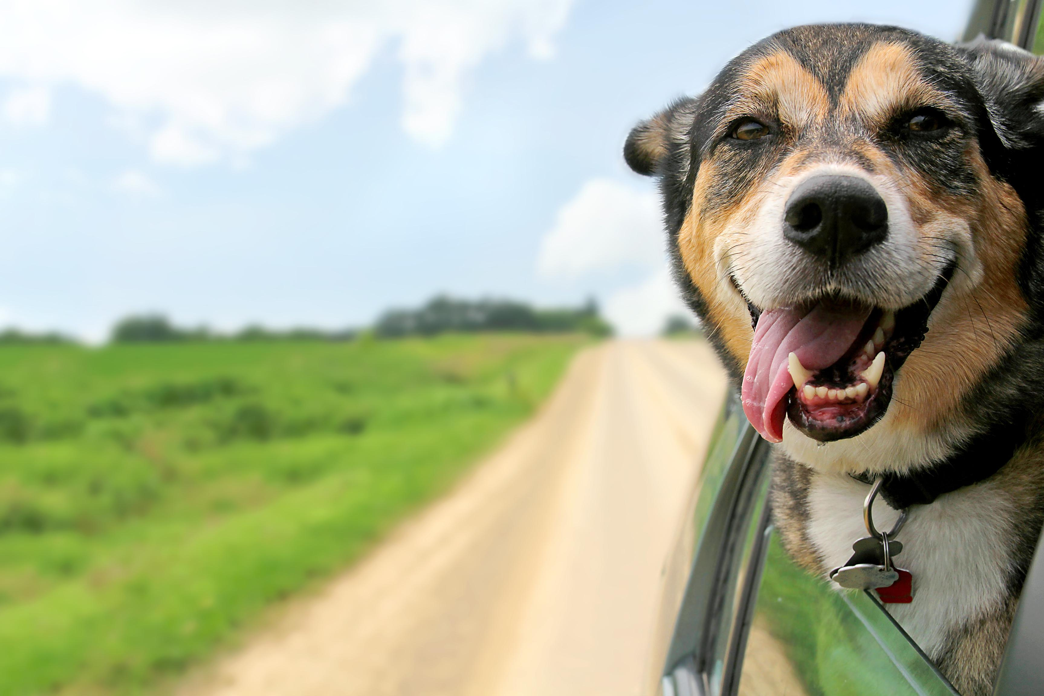 Rehomed Dog