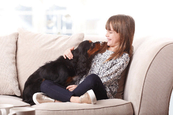 Tips For Leaving Your Dog Home Alone The Good Dog Guide