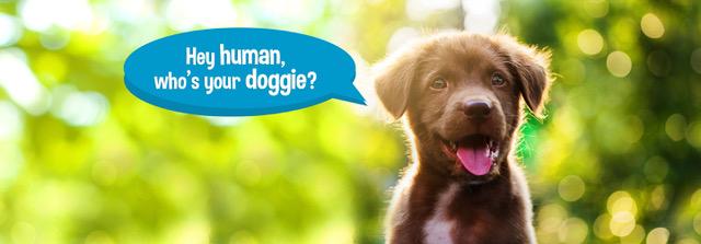 adopting a dog?
