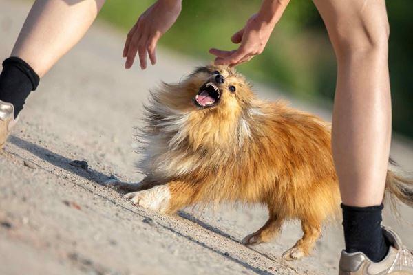 Behavior in Dogs