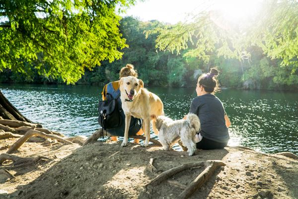 Dog Friendly Holiday Destinations