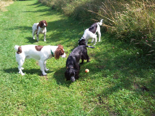 Dog Walking in Sunderland, Tyne and Wear