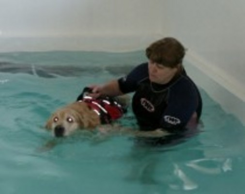 Canine Hydrotherapy and Dog Grooming