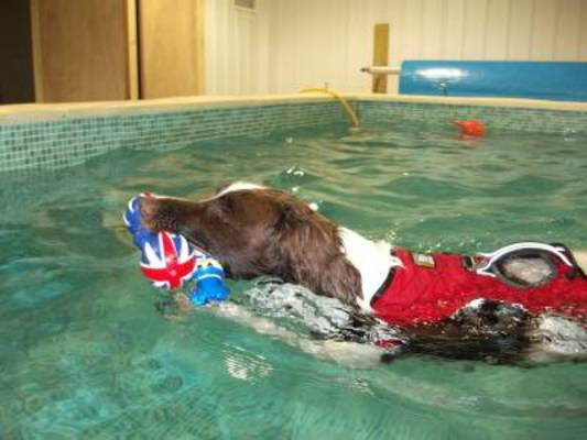 Dog hydrotherapy in Dorset
