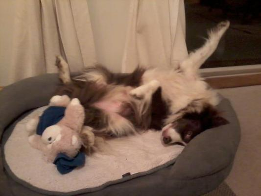 Dog Home Stay in East Sussex