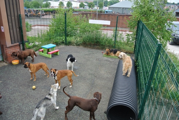 Dog Training in Whitefield