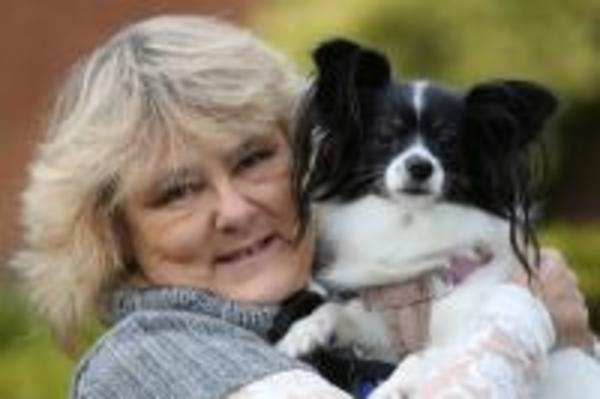 Taking The Lead. Dog trainer & behaviourist in Shoreham. West Sussex