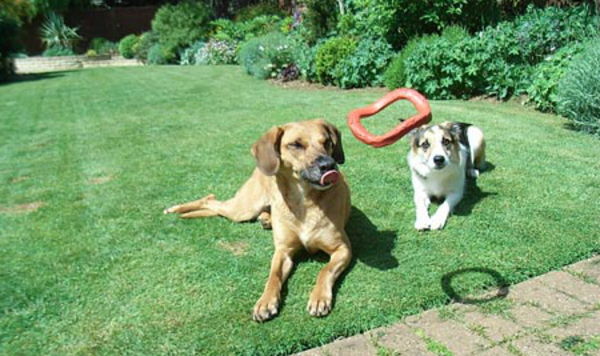 Dog Home Stay in Thirsk