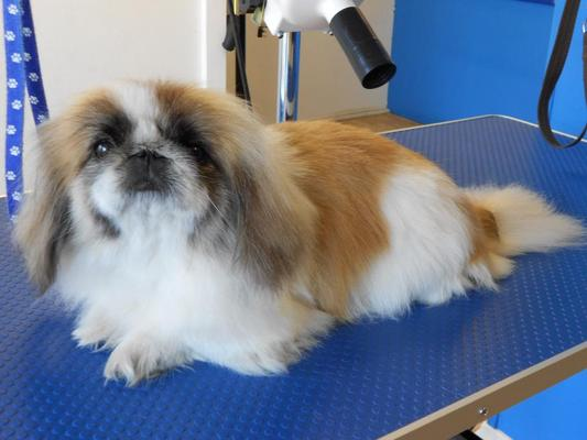 Dog Groomer in Trowbridge