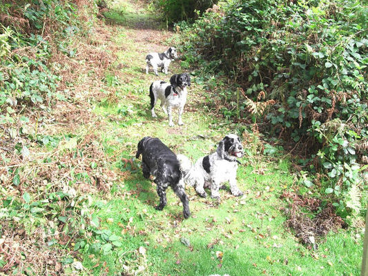 Dog Home Stay in Llanishen