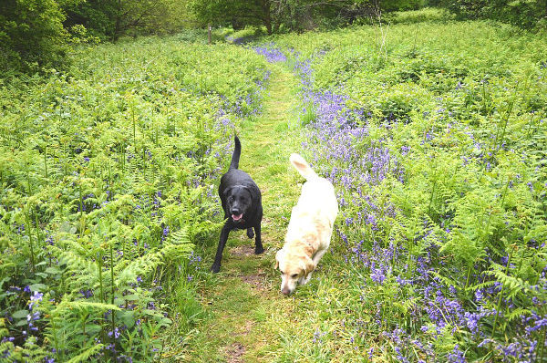 Dog Home Stay in Cardiff