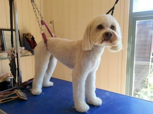 Dog Groomer in Bexhill