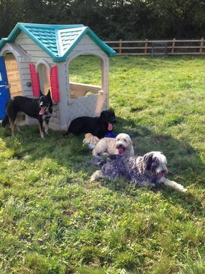 Dog Day care in Essex