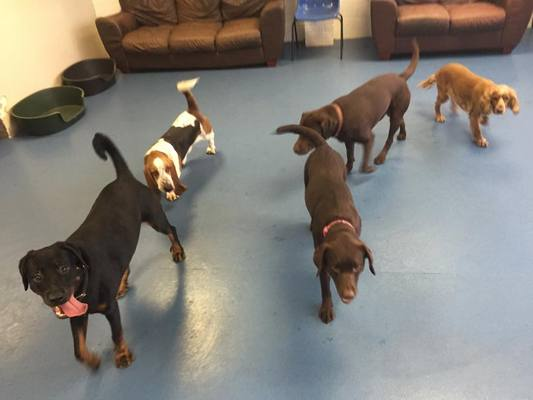Dog Day care in Hampshire