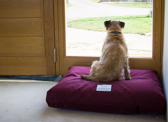 Berkeley Dog Beds Ltd