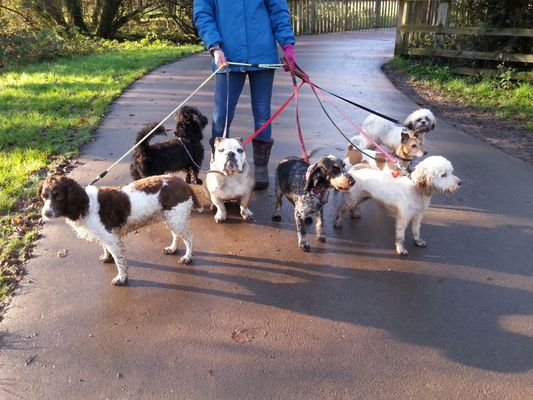 Dog Walker in Berkshire