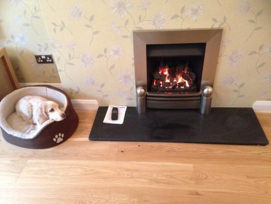 Dog Friendly bed and breakfast in West Sussex