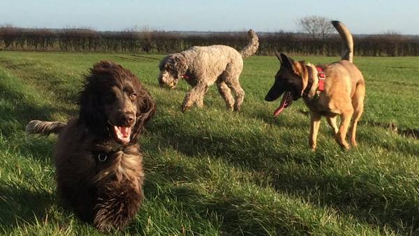 Dog Home Stay in Northamptonshire