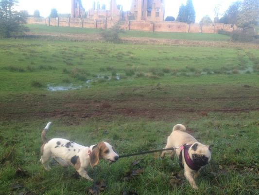 Dog Walker in Bedworth