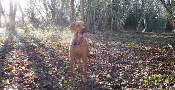 Dog Home Stay in Reading