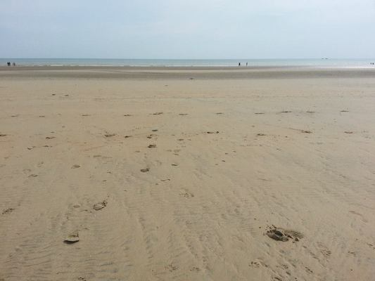 Dog Friendly Beach in East Sussex