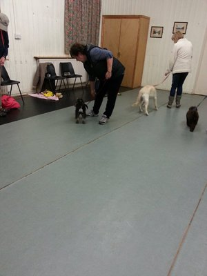 Dog Trainer in Yorkshire