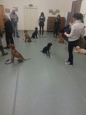 Dog in need of training