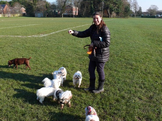 Dog Walker in West Sussex