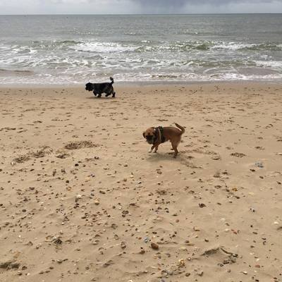Dog Home Stay in Bournemouth
