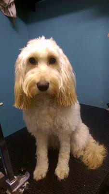 Dog Grooming in Bury