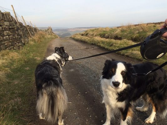 Dog Walking in Yorkshire