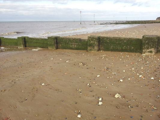 Dog Friendly Beach in King's Lynn
