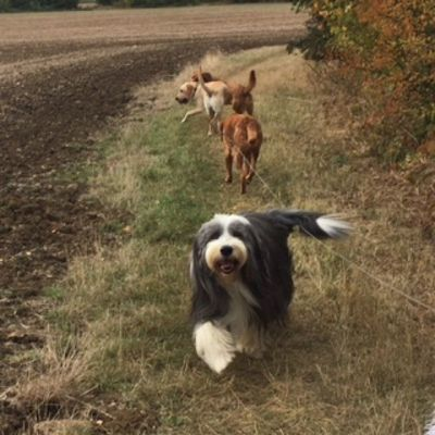 Dog Home Stay in Marston Moretaine