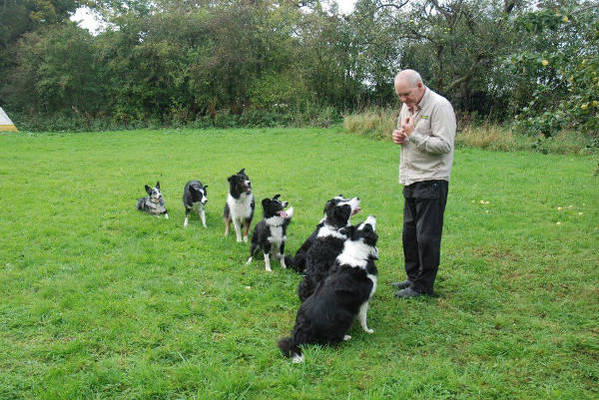 Dog Training in Warrington
