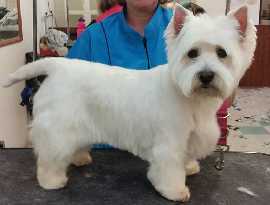 Dog Groomer in Hampshire