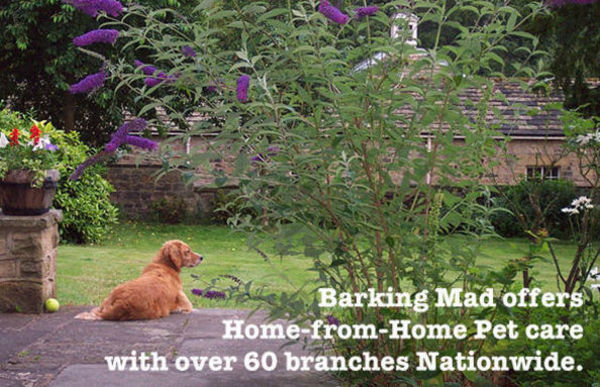 Dog Home Stay in Lancashire