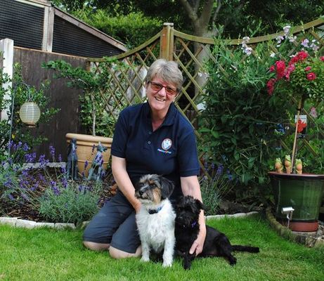 Dog Home Stay in Shrewsbury