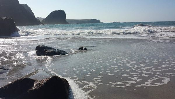 Dog Friendly Beach in Cornwall