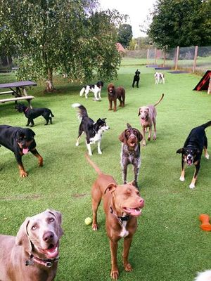 Dog Day care in Washington