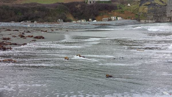 Dog Friendly Beach in St Keverne