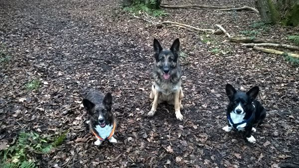 Dog Trainer in Hampshire