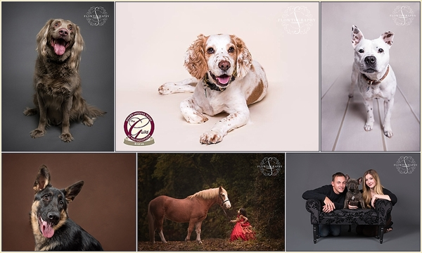 Pet photography in Essex