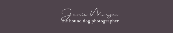 Hound Dog Photography