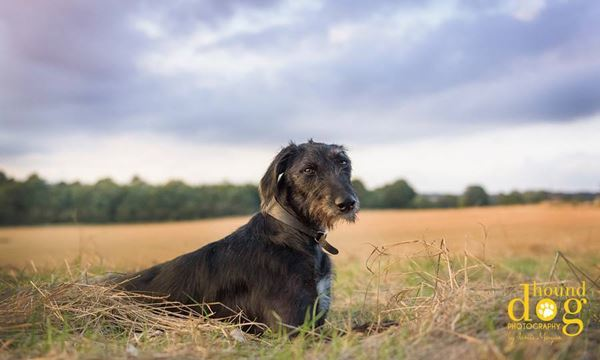 Pet photographer in Derbyshire