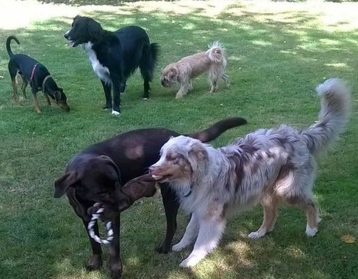 Dog Trainer in Lincolnshire